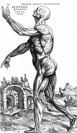Vesalius_fit_600x600